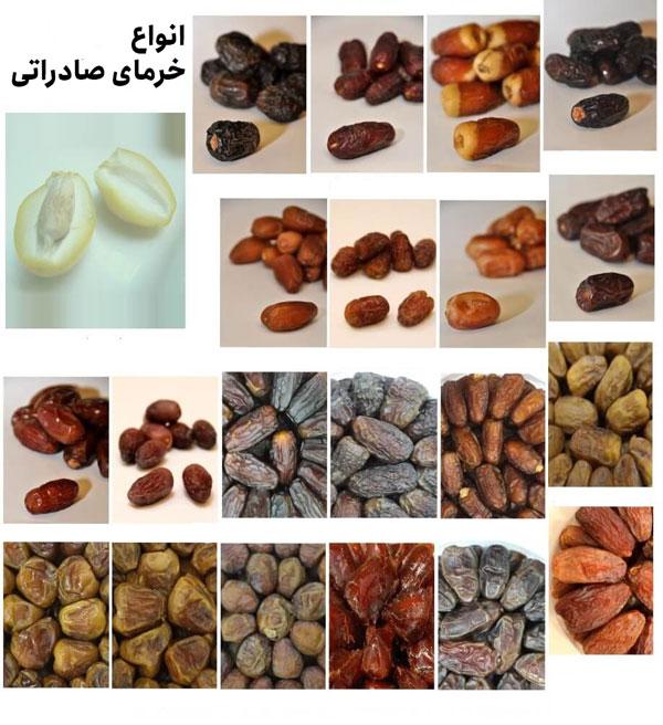 types of dates - صادرات خرما